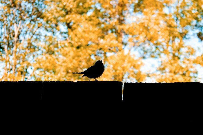 """""""A bird with the word came to me"""" Bird Animals In The Wild Animal Wildlife One Animal Animal Themes Perching No People Outdoors Autumn Low Angle View Day Silhouette Nature Illuminated Breathing Space Nature Fragility Tree Sunset Pet Portraits Perspectives On Nature Be. Ready."""