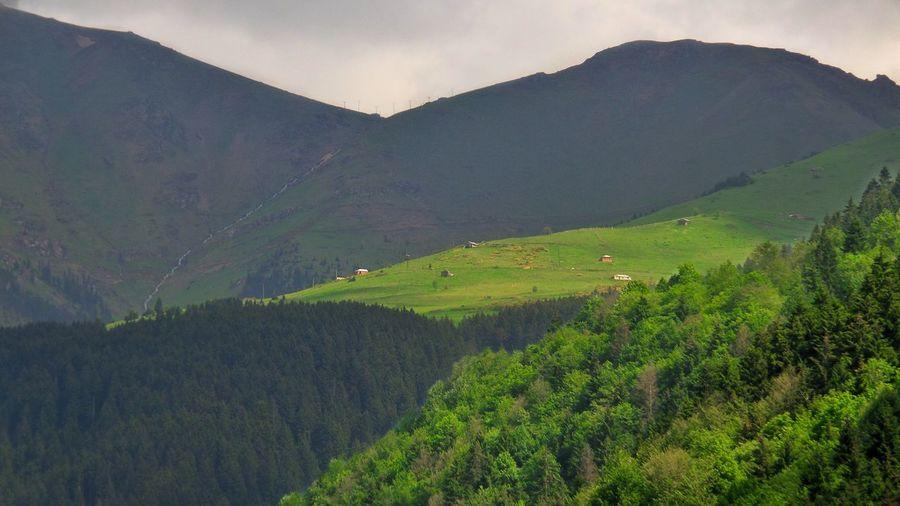 Trabzon Katipinyeri Zigana Hamsiköy Natural Doğa Mezere First Eyeem Photo