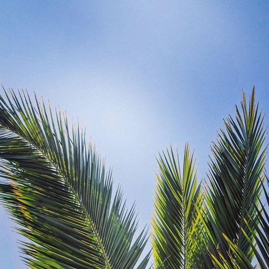 Bring back the sunshine please 🌞🌴 Sun Sunshine Sky Palm Plants Nature Naturelovers Ig_nature Ig_naturelovers Instapic