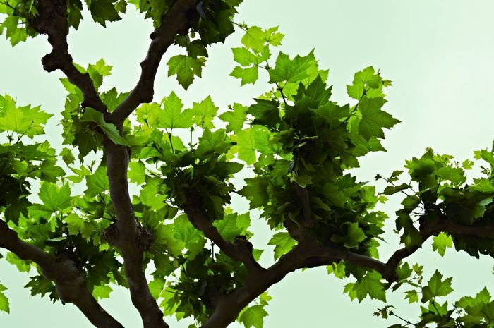 Tree And Sky Tree