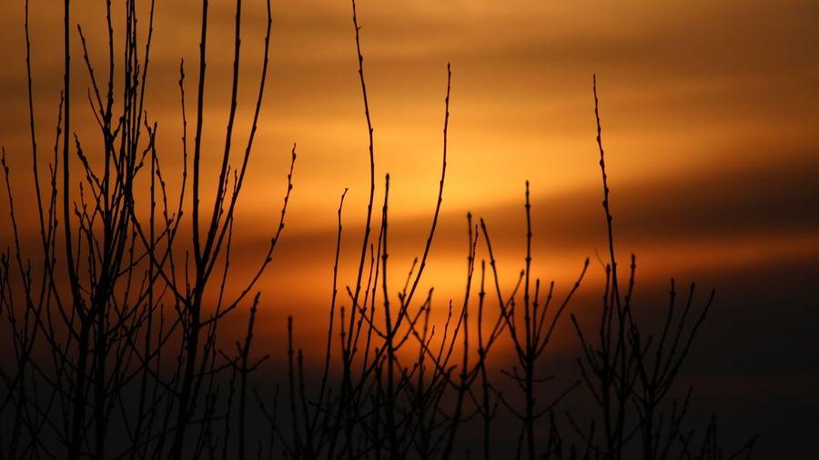 Sunset - room