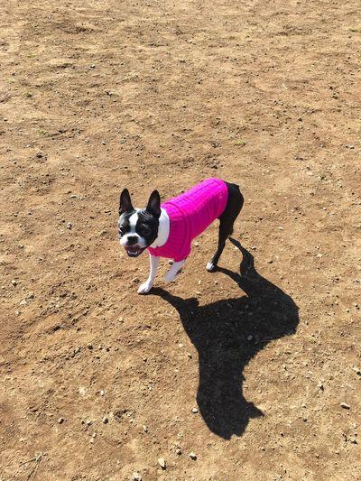 こじろう One Animal Animal Themes Dog Domestic Animals Mammal Pets Full Length High Angle View Shadow No People Nature