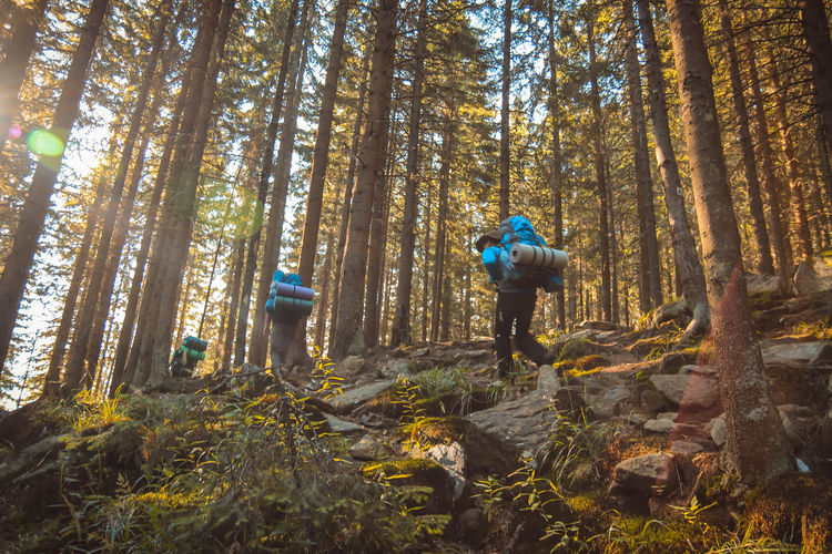 Adult Adults Only Adventure Backpack Beauty In Nature Day Forest Full Length Growth Healthy Lifestyle Hiking Leisure Activity Men Mountain Bike Nature One Man Only One Person Only Men Outdoors Real People Sportsman Tree Tree Trunk Vitality WoodLand