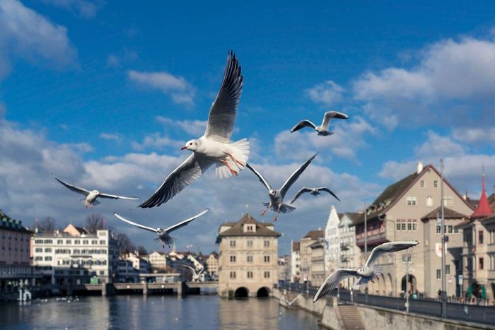 Seagulls @lake of Zuerich Lake Of Zurich Seagulls And Sea Water Bird Spread Wings Flying Architecture Animals In The Wild Built Structure