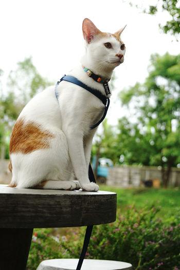 Cute cats wear