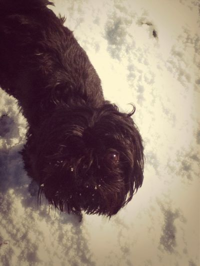 My Dog(: