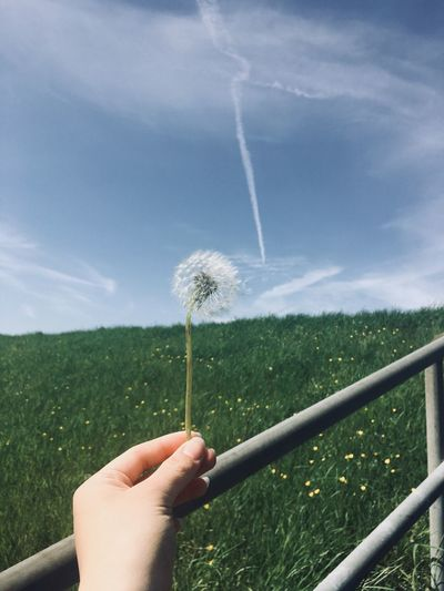 Cropped hand of woman holding dandelion seeds against landscape