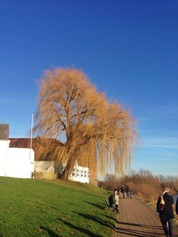 Neujahrstag :) Rhein Rees Neujahr Taking Photos
