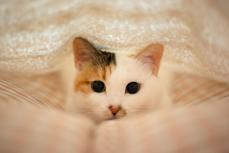 Hiding Cat Cat Domestic Cat Domestic Mammal Pets Animal Themes Animal Domestic Animals Kitten Animal Eye Softness Portrait One Animal Pet Cute Lovely Hiding Hide And Seek
