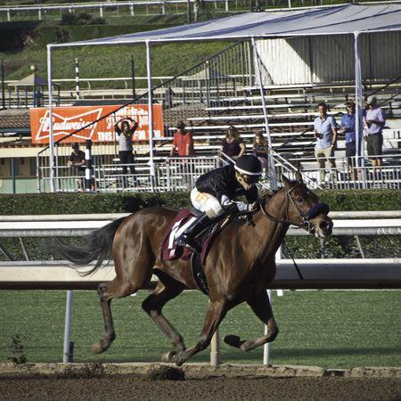 Santa Anita Horse Racing Race Horse D5500 Horse Competition Sport