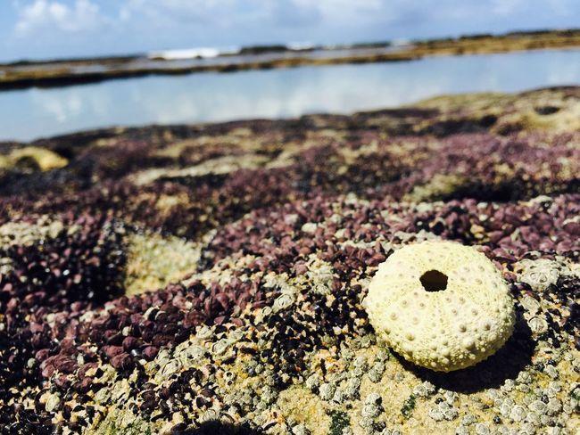 Vendo a vida de maneira diferente! Sun Sunny Beach Vacation Tksgod Pernambuco Gaibu Picoftheday Nature Beautiful