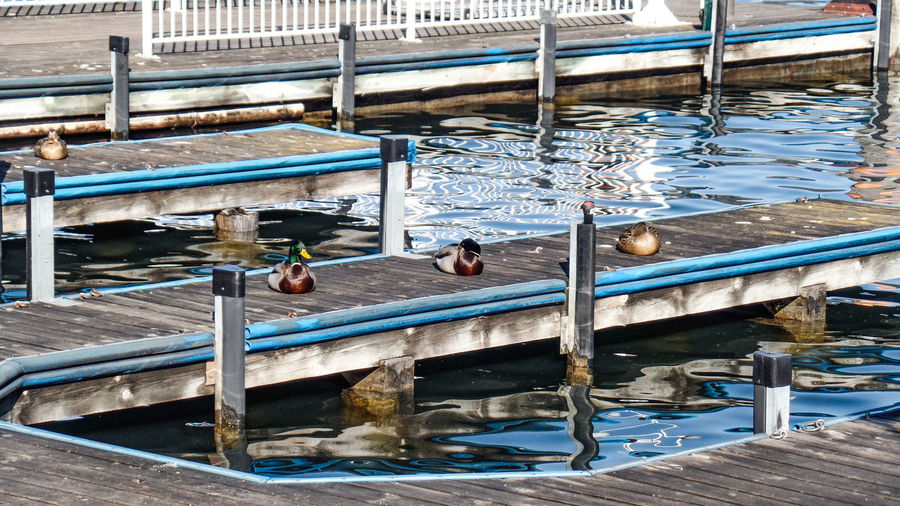 Water Animal Animal Themes Day Animal Wildlife Vertebrate No People Group Of Animals Nature Animals In The Wild Lake Bird High Angle View Railing Wood - Material Blue Transportation Outdoors Architecture Swimming Pool