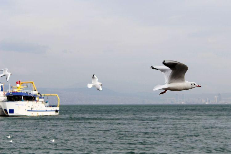 EyeEmNewHere Bird Spread Wings Water Flying Sea Mid-air Motion Animal Themes Sky Seagull Sea Bird