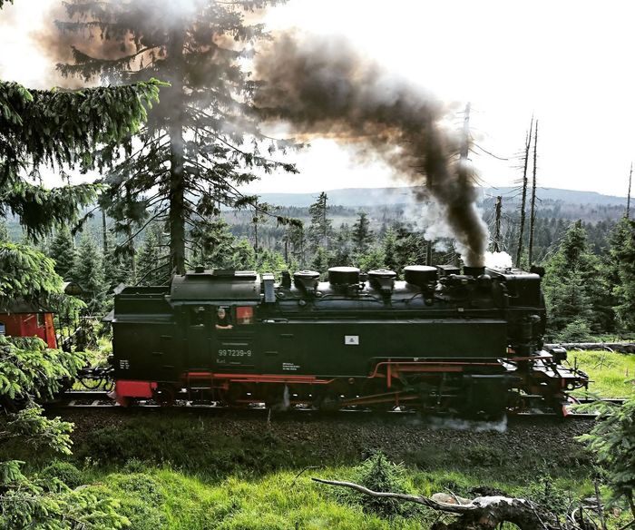 Train Smoke - Physical Structure Tree Fire Engine Outdoors Traveling Trees And Sky Dampflok Tourist Attraction  Trainspotting