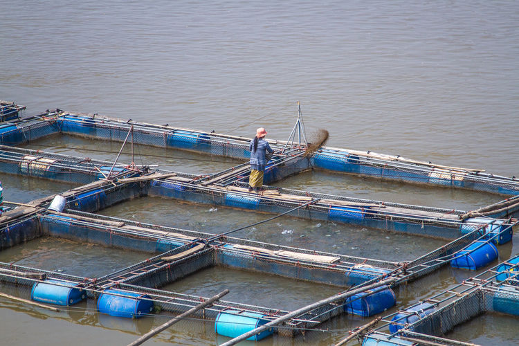 High angle view of woman feeding fish in farm