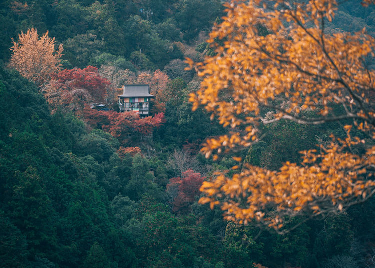 // autumn in kyoto // EyeEm Best Shots EyeEm Nature Lover Nature Autumn Autumn colors Autumn Leaves autumn mood Shootermag Shootermagazine AMPt_community Yellow Thedarksquare Tree Plant Beauty In Nature Growth Change Forest Architecture No People Day Built Structure Orange Color Land Scenics - Nature Outdoors Building Exterior Tranquility Mountain Building