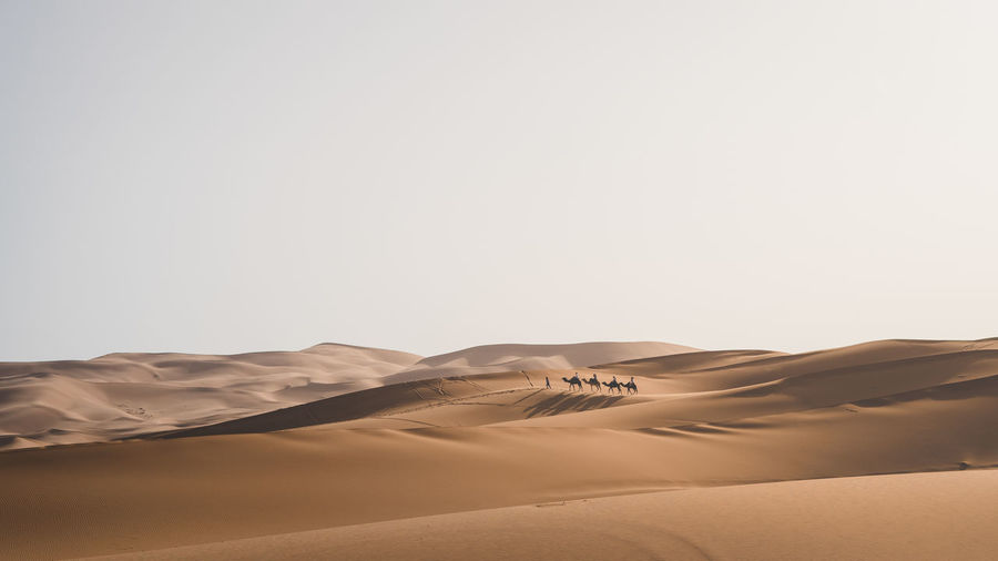 Group of people riding camels in the vast desert Atmospheric Outdoors Non-urban Scene Day Remote Clear Sky Beauty In Nature Nature Sky Environment Tranquil Scene Arid Climate Climate No People Tranquility Landscape Land Scenics - Nature Sand Sand Dune Desert Copy Space