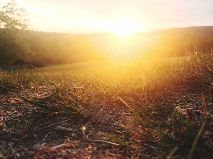 Sun Nature Sunset Sunbeam Sunlight Lens Flare Tranquil Scene Tranquility Landscape Field Scenics Growth Bright Outdoors No People Beauty In Nature Idyllic Plant Tree