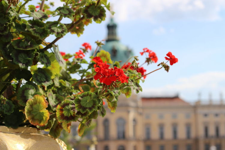 Blumen Castle And Flower Castle View  Day Daylight Dreaming Flower Red