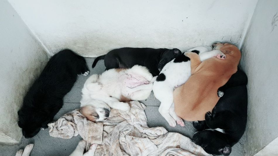 warm hug Thai Dogs Dog Sleeping Dogs Pets Puppy Lying Down Men High Angle View Mature Men Eyes Closed