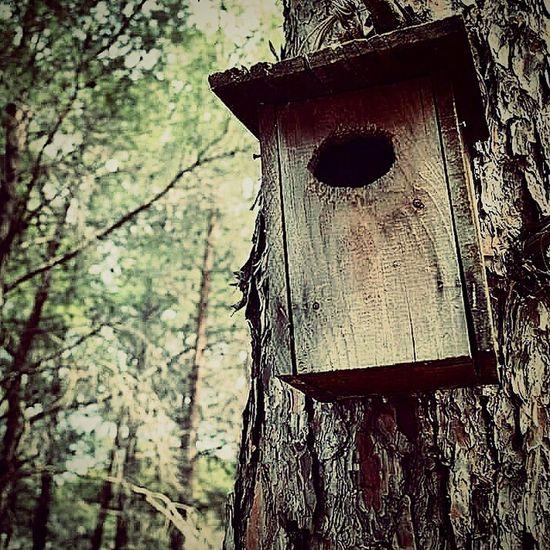 Birdhouse Forest Kuşevleri Orman PhotoByMuratGul