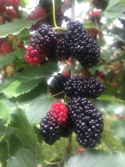 Gratidão...🙏🏻🙏🏻🙏🏻 Nature Blueberry Blessed  Blueberries House Fresh Fruits