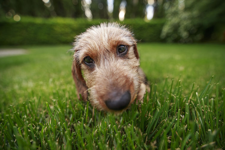 Close-up portrait of puppy on field