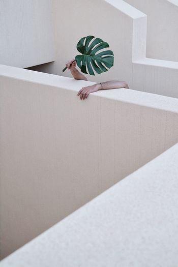 Exhausted Monstera Plant Hands Geometry Architecture Conceptual The Week on EyeEm Eye4photography  EyeEm Selects EyeEm Nature Lover EyeEm Best Shots The Architect - 2018 EyeEm Awards The Still Life Photographer - 2018 EyeEm Awards The Creative - 2018 EyeEm Awards High Angle View Nature Day Full Length Human Body Part Architecture Wall - Building Feature Body Part Concrete Hand