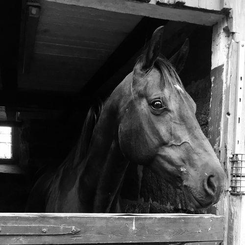 First Eyeem Photo Horse