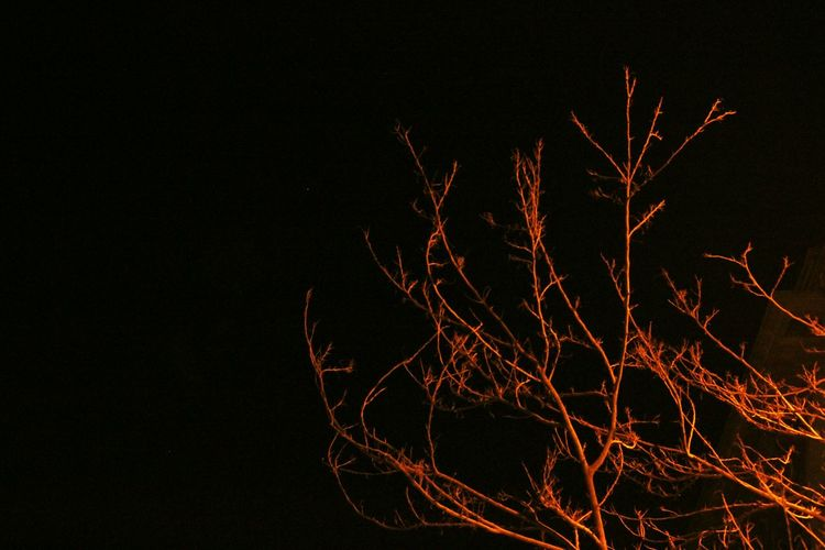 Tree in dark... Tree In Dark Enlighted Dead Tree Branches Light And Shadow Dark Tree Night Photography Welcome To Black