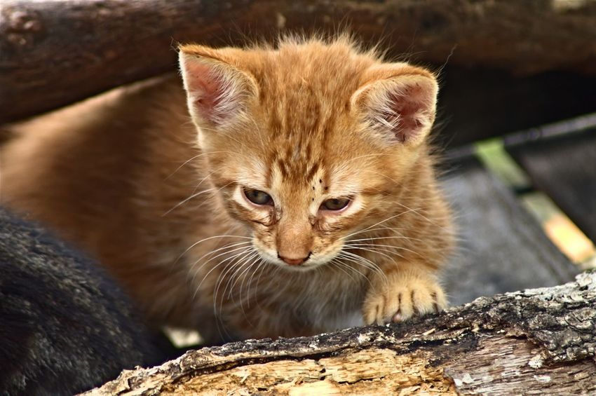Here Kitty, kitty... Cat Close-up Domestic Cat Feline Nature Outdoors Selective Focus Whisker