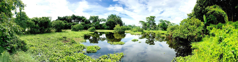 Taking Photos credit goes iphone 6s (pano). Natural view of Bangladesh