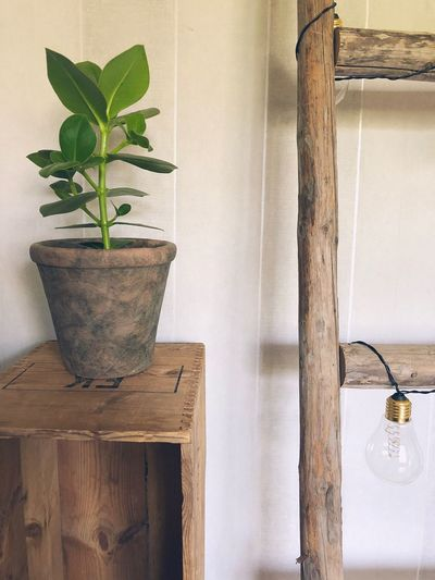Ladder and plant Recycling Ladder EyeEm Selects Plant Potted Plant Growth Indoors  No People Home Interior Flower Pot Wall