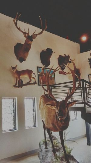 Vigan City — Indoors  Antler Animal Themes Break The Mold