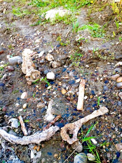 Pollution River Side Garbage Garbage River Old Outdoors Nature No People Environment
