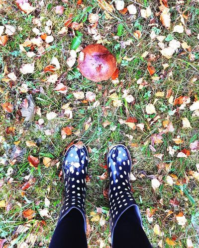 to collect mushrooms Autumn Autumn colors Birch Leaves Gum Boots Nature Rain Rainy Days Leaf Mushroom Mushrooms Birch Bolete To Collect Mushrooms Low Section Standing Human Leg Canvas Shoe Shoe High Angle View Human Foot Grass Human Feet Rainfall Leaves Maple Leaf Monsoon Fallen Fall Growing RainDrop