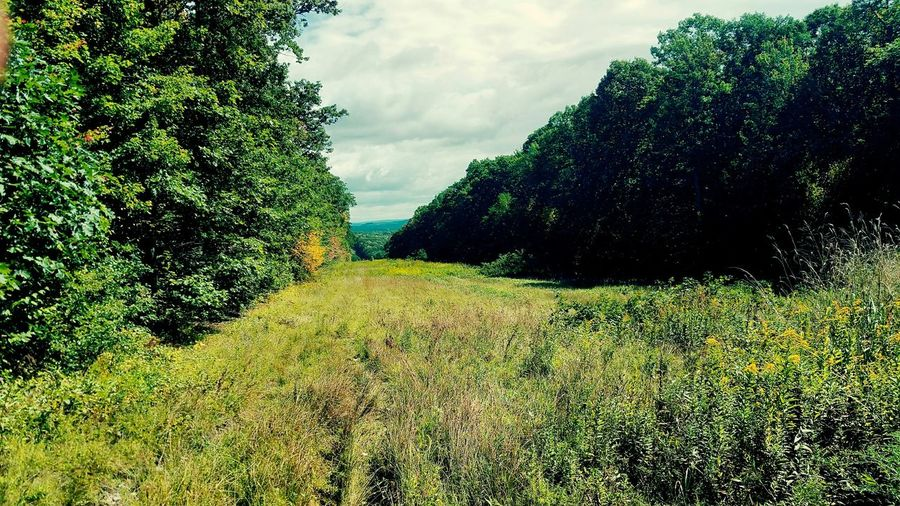 Laurel Highlands Hiking Trail Nature Photography Pennsylvania Fields And Sky Hiking TreePorn Earthporn Nature