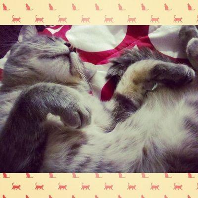 Feli Mi nuevo mejor amigo <3 Cat Love