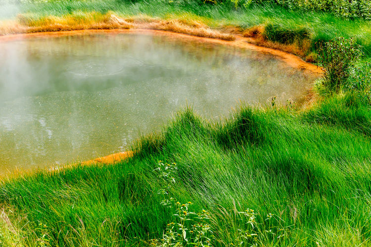 Beauty In Nature Day Field Grass Green Color Growth Hot Bath Landscape Motion Nature No People Outdoors Scenics Tranquil Scene Tranquility Valley Of Geyser Water