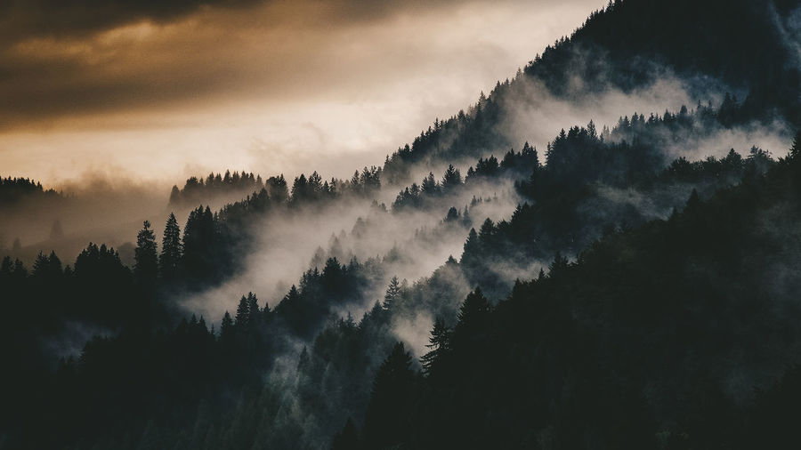 Panoramic shot of silhouette trees in forest against sky
