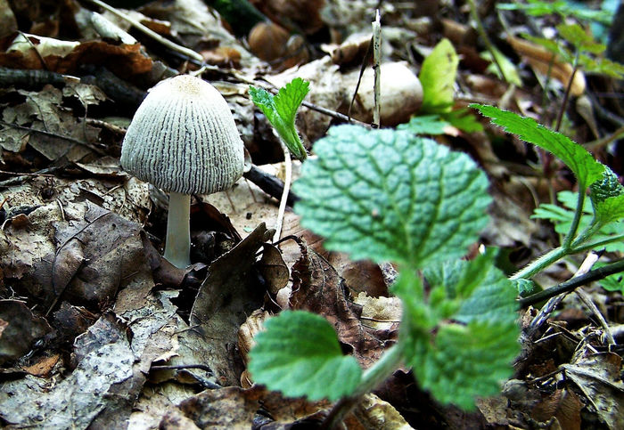 Beauty In Nature Close-up Day Field Focus On Foreground Food Forest Fungus Green Color Growth Land Leaf Mushroom Nature No People Outdoors Plant Plant Part Selective Focus Toadstool Vegetable Wild