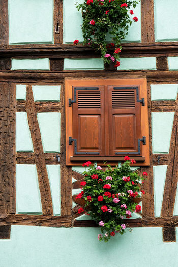 Old house facade with window, Timbered house. Alsace Alsace France France France Photos France Trip Timbered House Timbered Houses Old House Façade Facades Window Plant Architecture Flower Flowering Plant Built Structure Wood - Material Building Exterior House Door Nature No People Building Entrance Day Outdoors Growth Closed Potted Plant Residential District Wood Flower Pot Window Box Window Frame