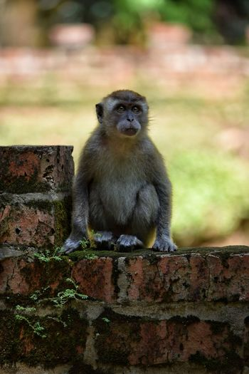 Macaque Monkey Sitting Full Length Young Primate Ipoh Cute Baby Monkey Animal Wildlife Nature One Animal Shade Looking At Camera Animal Body Part Animals In The Wild No People Animal Themes Close-up Sitting Day Ape Nature Animal Visit Ipoh