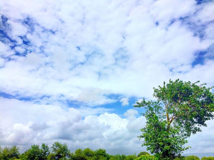 🙂beauty Sky Tree Cloud - Sky Low Angle View Beauty In Nature Scenics Day Cloudy Nature (null)Cloud Outdoors Green Beautiful Clear Sky Trees Skyporn