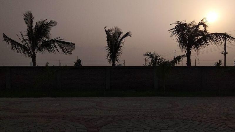 Sky Urban Palm Tree Silhouette
