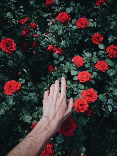 Cropped Hand Of Man Reaching Flowering Plants