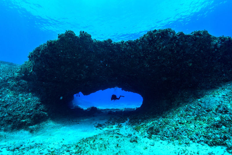 Rota Underwater UnderSea Sea Water Swimming Coral Sea Life Blue Invertebrate Nature Real People Animals In The Wild Sport Leisure Activity Exploration Lifestyles Animal Wildlife Animal Scuba Diving Marine Outdoors Underwater Diving