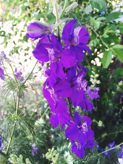 """""""Nothing is more memorable than a smell. One scent can be unexpected, momentary and fleeting, yet conjure up a childhood summer beside a lake in the mountains."""" -Diane Ackerman Tadaa Community Flowers Summer Purple Flower ArizonaBeauty"""