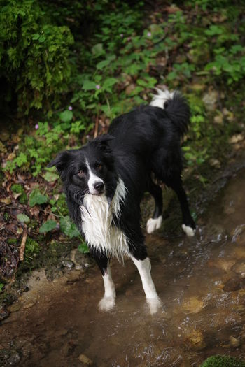 High angle view of dog on wet shore