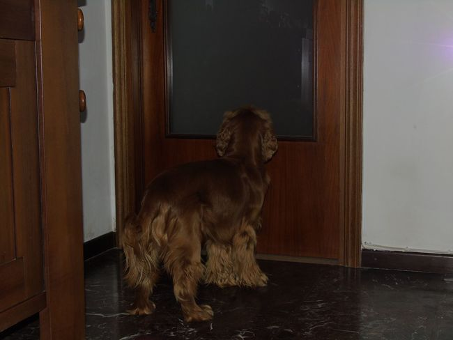 Dog Door Pets Dark Flash Brown White Minimal